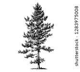 black pine tree vintage... | Shutterstock .eps vector #1283975008