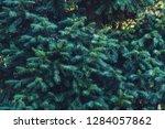 forrest of green pine trees on...   Shutterstock . vector #1284057862