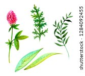 set of watercolor flowers and... | Shutterstock . vector #1284092455