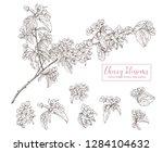 set of vector sketch cherry... | Shutterstock .eps vector #1284104632