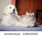 Stock photo the white dog plays with red cat 128410565