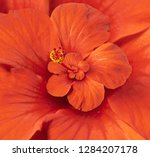 spiral fractal image of red...   Shutterstock . vector #1284207178