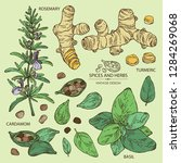 collection of herbs and spices  ...   Shutterstock .eps vector #1284269068