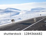 Three Dogs With Snowy Landscape