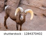 an arizona mountain goat... | Shutterstock . vector #1284370402