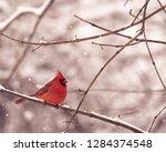 Cardinal  Cardinalidae  On A...