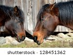 two horses sleeping | Shutterstock . vector #128451362