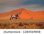 gemsbok with orange sand dune... | Shutterstock . vector #1284569848