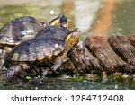 turtles in the sun on the lake ...   Shutterstock . vector #1284712408