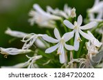 orchid in the botanical garden...   Shutterstock . vector #1284720202