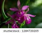 orchid in the botanical garden...   Shutterstock . vector #1284720205