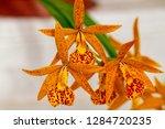 orchid in the botanical garden...   Shutterstock . vector #1284720235