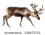 reindeer  rangifer tarandus .... | Shutterstock . vector #128472722