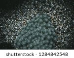 top view on green tropical...   Shutterstock . vector #1284842548