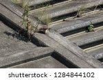 wild birds living in urban... | Shutterstock . vector #1284844102