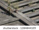wild birds living in urban... | Shutterstock . vector #1284844105