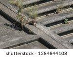 wild birds living in urban... | Shutterstock . vector #1284844108