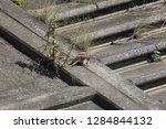 wild birds living in urban... | Shutterstock . vector #1284844132
