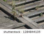 wild birds living in urban... | Shutterstock . vector #1284844135