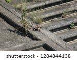 wild birds living in urban... | Shutterstock . vector #1284844138