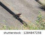 sturgeon living in an urban... | Shutterstock . vector #1284847258