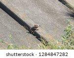 sturgeon living in an urban... | Shutterstock . vector #1284847282