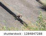 sturgeon living in an urban... | Shutterstock . vector #1284847288