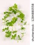 bryony botanical board   Shutterstock . vector #1284880558