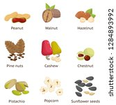 set of different types of nuts. ... | Shutterstock .eps vector #1284893992