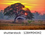 hut in the rice field and... | Shutterstock . vector #1284904342