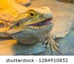 lizard close up face | Shutterstock . vector #1284910852