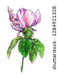 pink peony rose flower....   Shutterstock . vector #1284921328