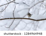 beautiful background with gray... | Shutterstock . vector #1284964948