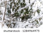 beautiful background with gray... | Shutterstock . vector #1284964975