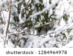 beautiful background with gray... | Shutterstock . vector #1284964978