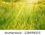 Spring Grass Lit By The Mornin...