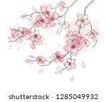 spring sakura flowers blossom... | Shutterstock .eps vector #1285049932