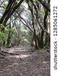 trees in subtropical rainforest ... | Shutterstock . vector #1285061272
