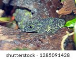 frog camouflage in the jungle | Shutterstock . vector #1285091428