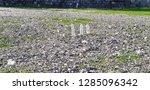 three bottles of mineral water... | Shutterstock . vector #1285096342