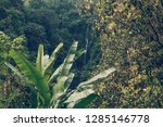 sekumpul waterfall in the green ... | Shutterstock . vector #1285146778