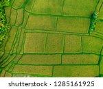 pictures of rice fields in ubud ... | Shutterstock . vector #1285161925