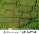 pictures of rice fields in ubud ... | Shutterstock . vector #1285161928
