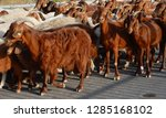 Small photo of livestock to the reentry in sheepfold