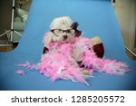 behind the scenes dog photo... | Shutterstock . vector #1285205572
