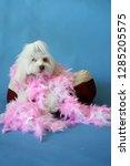 dog photo shoot. beautiful... | Shutterstock . vector #1285205575