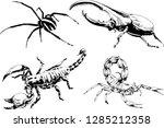 vector drawings sketches... | Shutterstock .eps vector #1285212358