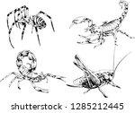 vector drawings sketches... | Shutterstock .eps vector #1285212445