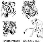 vector drawings sketches... | Shutterstock .eps vector #1285219468