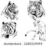 vector drawings sketches... | Shutterstock .eps vector #1285219495
